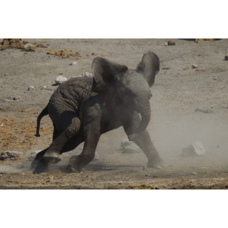 Elephant Antics in Namibia