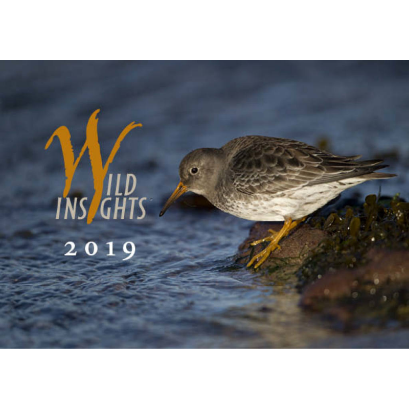 New Wild Insights Calendar - 2019